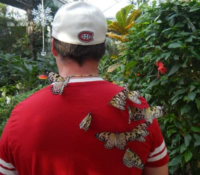 rice paper butterflies attracted to red shirt 400x350